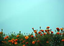 Music of Autumn – Malashree » DREAMS Magazine