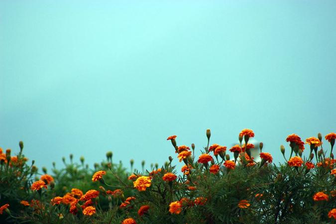 Music of Autumn – Malashree » My Dreams Mag