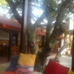 Cafe Nina3